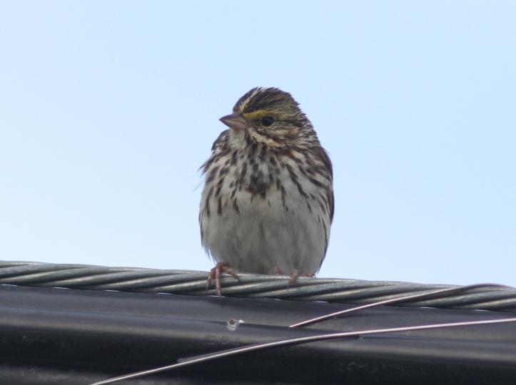 Savanah SParrow bhjffe