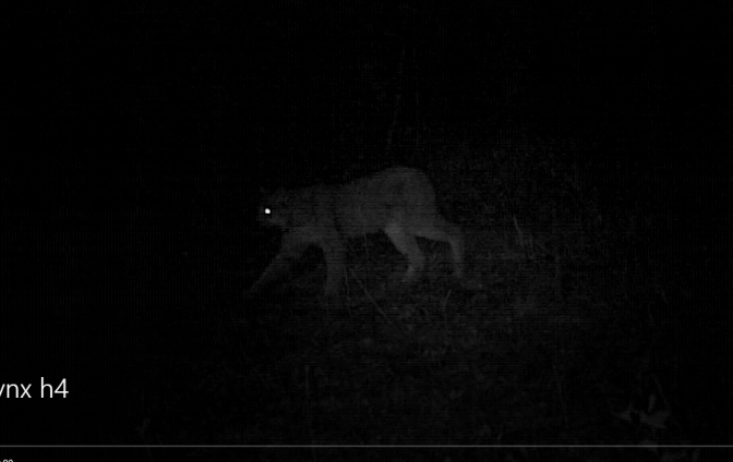 Lynx blog.PNG
