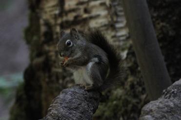 Red Squirrel SA2